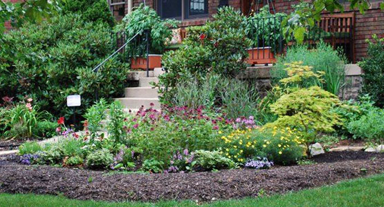 Rain Garden Alliance Plant List